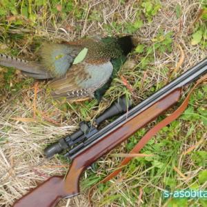 空気銃猟 ハンター人生〇年目にして初のキジを手に入れる