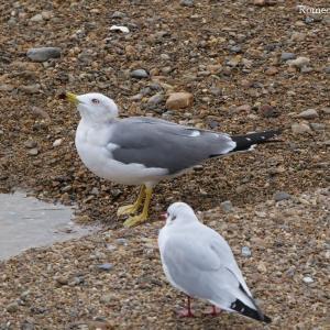 冬の海辺で鳥を見る