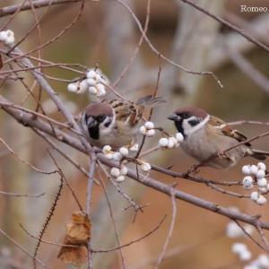 好きな野鳥はなんですか?