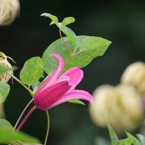 梅雨 公園の花