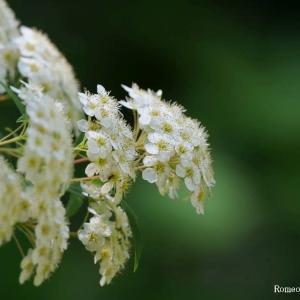 花言葉 7月の花々