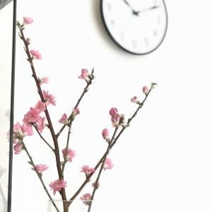 【花のある暮らし】お雛様と桃の花をリビングに飾りました(*´꒳`*)