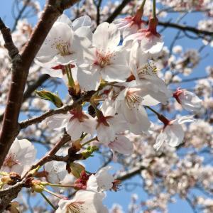 お庭に咲いた花たち♡可愛いお花で気分をあげよう(о´∀`о) & お買い物マラソンが始まります♫
