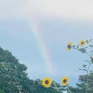 【花のある暮らし】今年もたくさん咲いてくれた紫陽花を収穫&ドライに(*´꒳`*)