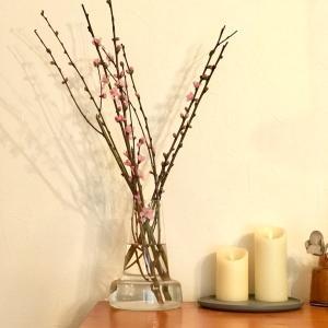お雛様と桃の花(´ω`*)