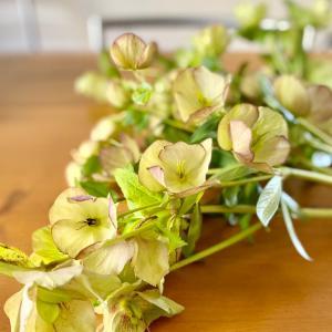 【花のある暮らし】お庭に咲いた大好きなクリスマスローズをドライに(*´꒳`*)