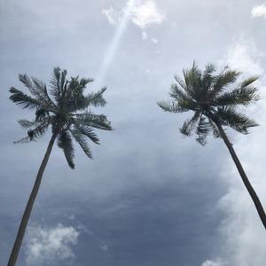 子連れサムイ島2泊3日④コーラル島(タン島)でシュノーケリング