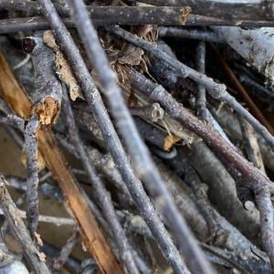 【自然回帰トレンド】春到来!燃料として木々の枝を集める。