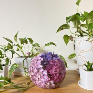 庭の紫陽花を飾ってみた♪
