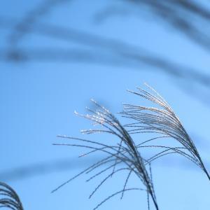 立冬、そろそろ冬眠の季節