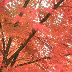 湯西川温泉の紅葉を撮影しました【PowerShot G7 X Mark II】