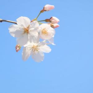 うれしい春がきた