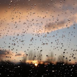 もしかして雨が好き?