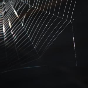 倉庫暮らしの蜘蛛