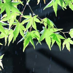 【カメラ初心者】シャッタースピードを変えて雨を撮る【PowerShot G7 X Mark II】