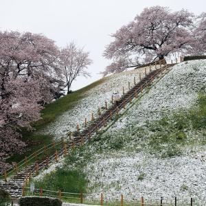 サクラ咲く古墳になごり雪の降る