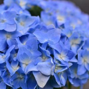 5月の庭で花撮り