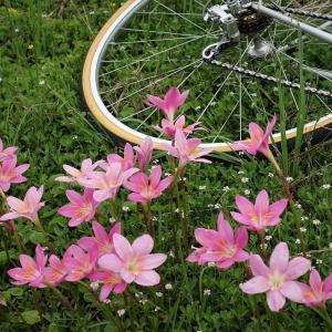梅雨の最中でも自転車活動