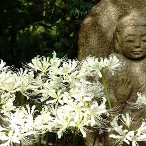 花の寺を訪ねてみる