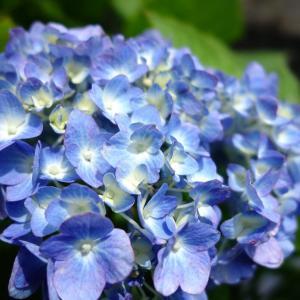 6月の庭で花撮り