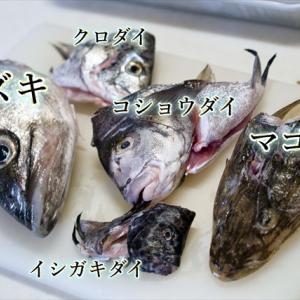 魚突きで大漁だった件