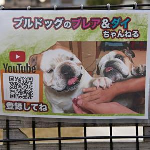 須賀川のワンコイベントに行ってきたよ