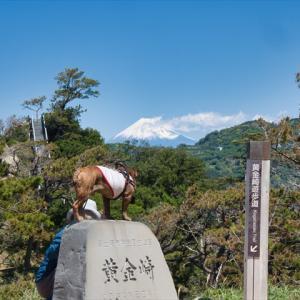 伊豆旅⑥黄金崎~竹林の小径
