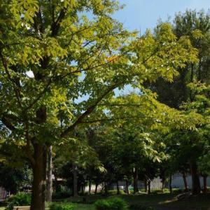 秋もキラキラ
