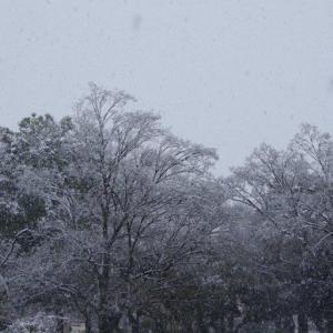 春の雪-1