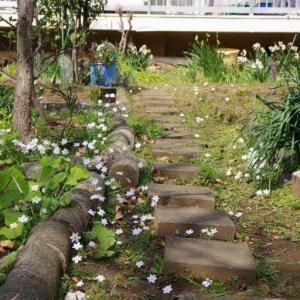 団地の小さ花-2