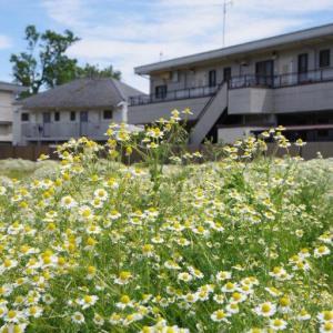 空地の雑草