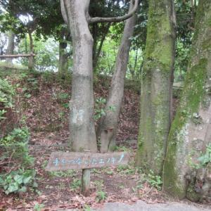 於大公園の変な樹