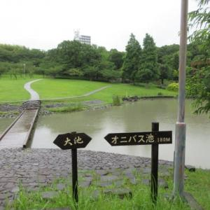 雨の於大公園