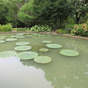 於大公園・オニバスの池