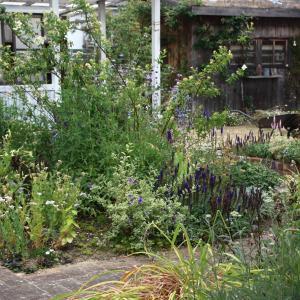6月前半の庭のようす