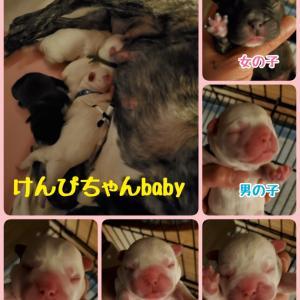 けんぴちゃんbaby誕生