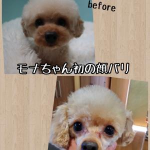 初の顔バリ(*´罒`*)