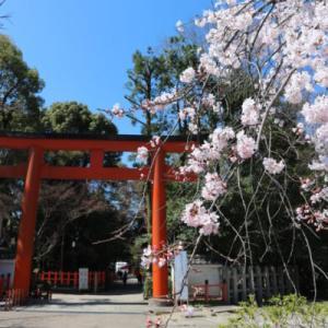 京都のお花見・美しい桜の名所【清水寺・八坂神社・二条城・嵐山】