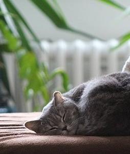 買って良かった無印良品*夏の寝具は大人気商品『三重ガーゼケット』がおすすめ!