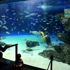 サンシャイン水族館の記憶