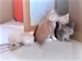 元気な子猫たち