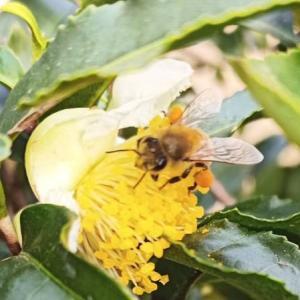養蜂の様子のYouTubeちゃんねるです。