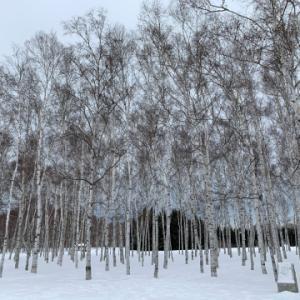 「前田森林公園」自然観察会