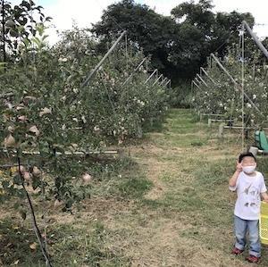 両親に誘ってもらい初めてのリンゴ狩り