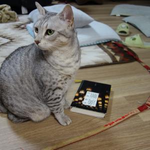 猫ボラはお金ではありません。