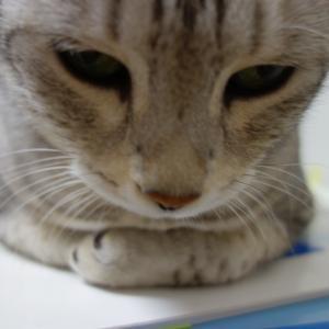 おジャマ猫