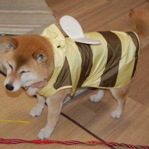 台風でも散歩に行きまーす!