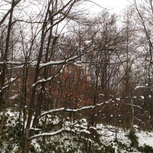 雪が降ったら…
