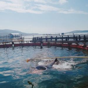 【沖縄・本部】2020年1月めんそ~れ沖縄!2人旅2日目~マンタやサメの飼育観察体験ツアー~