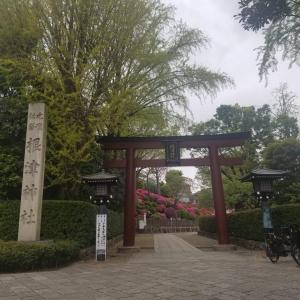 お出かけ(根津神社つつじ祭)